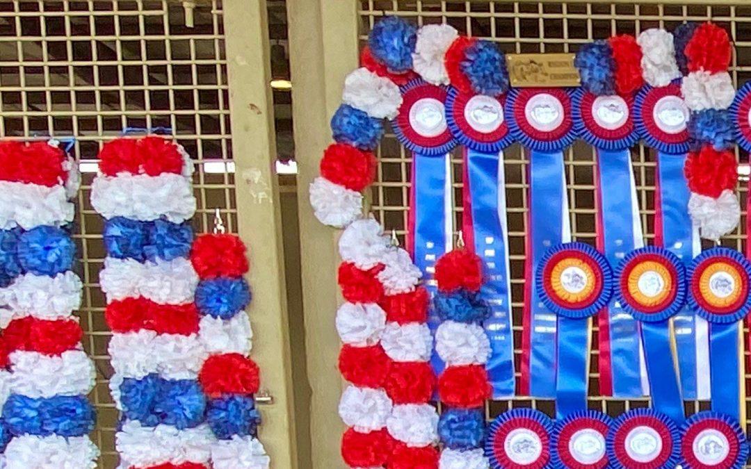 The Gold Team Attacks Region 15 Championship Arabian Horse Show